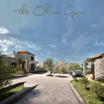 Traditional Olive Grove Project Crete