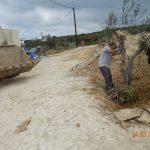 Olive Tree Transplanting