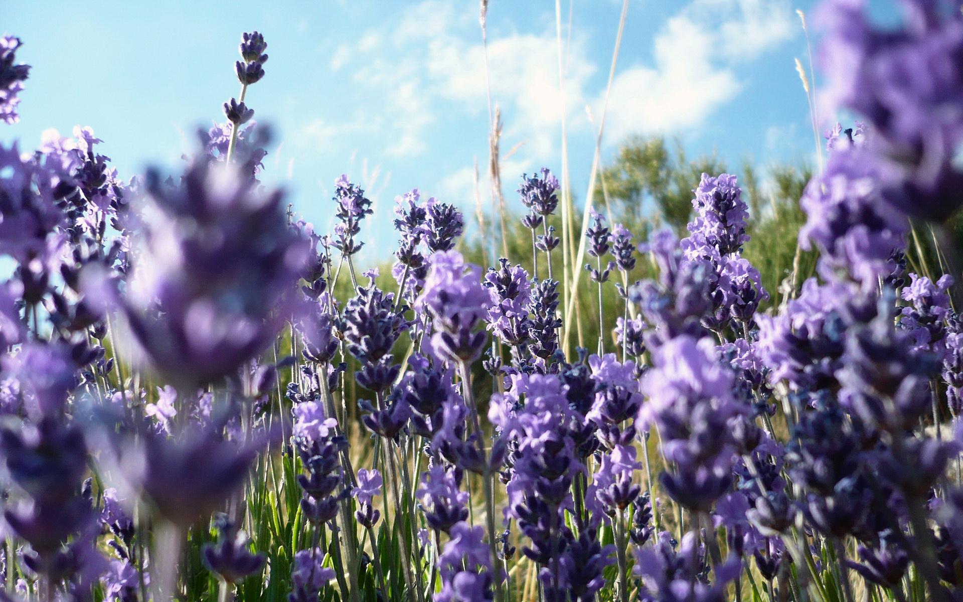 Stone Villa Lavender Crete lavenders fields
