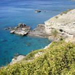 Cliffed Coast Palm Tree
