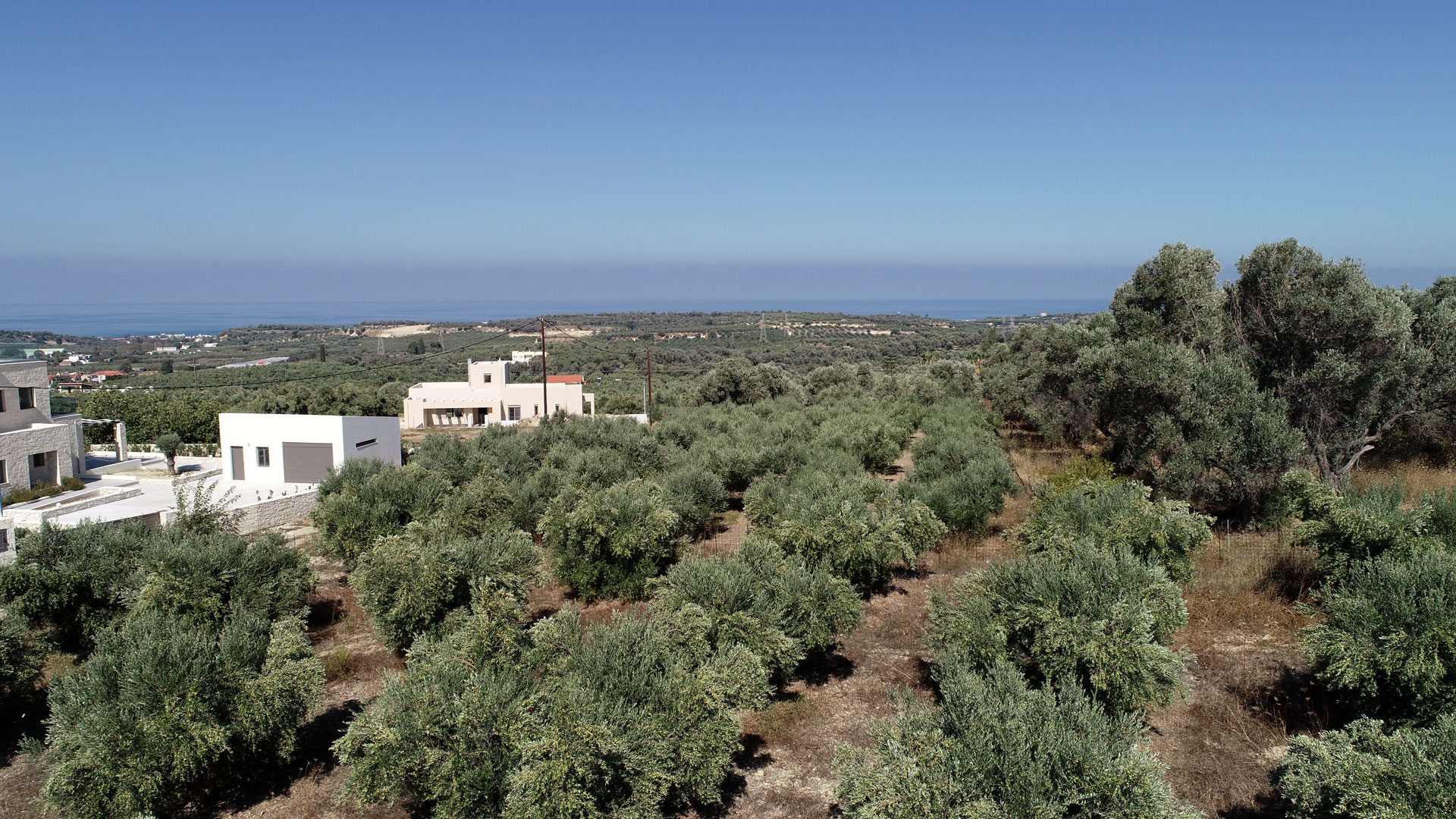 Olive grove Crete